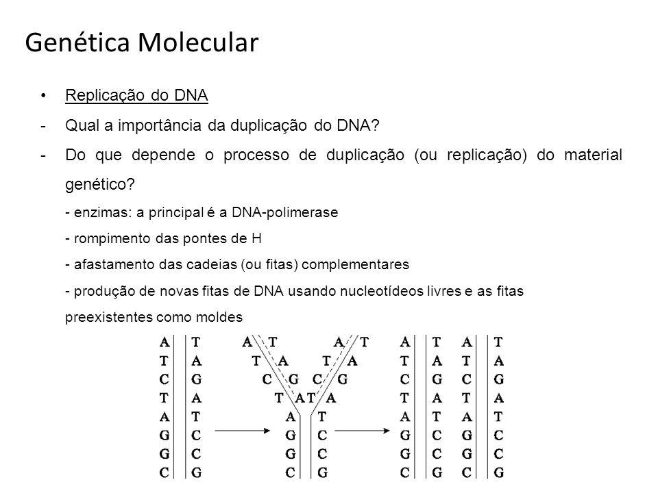 Genética Molecular Replicação do DNA -Qual a importância da duplicação do DNA? -Do que depende o processo de duplicação (ou replicação) do material ge