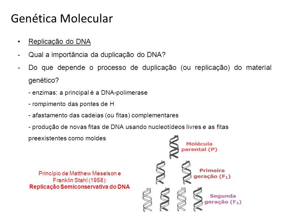 Replicação do DNA -Qual a importância da duplicação do DNA? -Do que depende o processo de duplicação (ou replicação) do material genético? - enzimas: