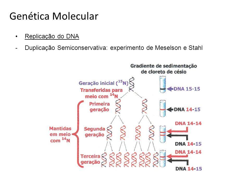 Replicação do DNA -Duplicação Semiconservativa: experimento de Meselson e Stahl Genética Molecular