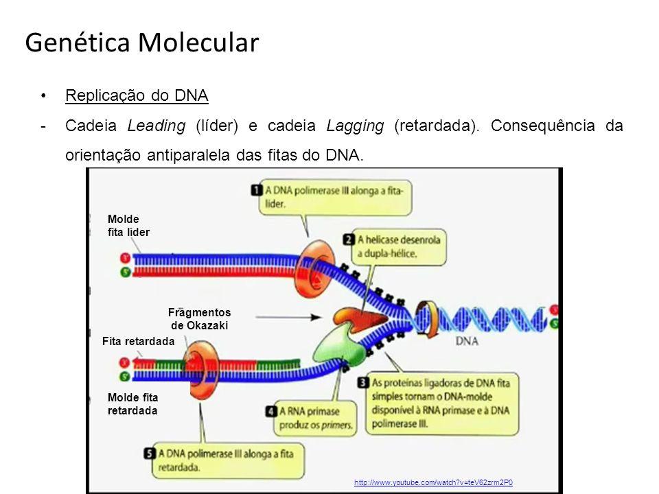 Replicação do DNA -Cadeia Leading (líder) e cadeia Lagging (retardada). Consequência da orientação antiparalela das fitas do DNA. Genética Molecular M