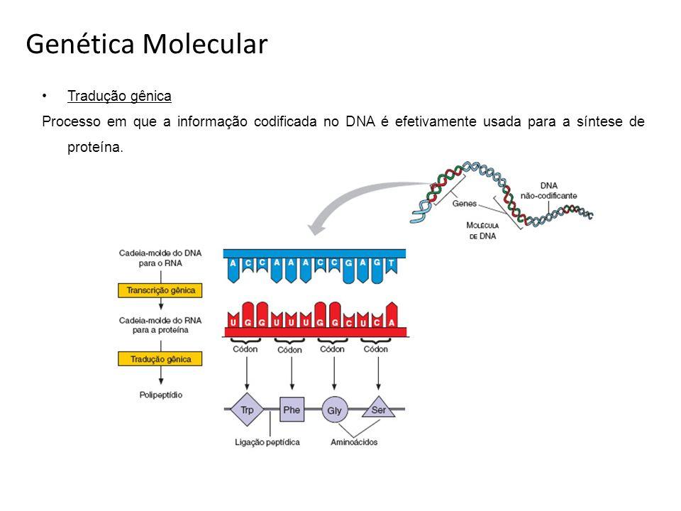 Genética Molecular Tradução gênica Processo em que a informação codificada no DNA é efetivamente usada para a síntese de proteína.