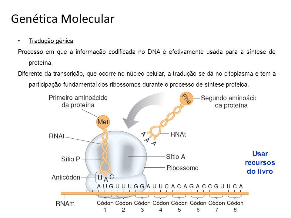 Genética Molecular Tradução gênica Processo em que a informação codificada no DNA é efetivamente usada para a síntese de proteína. Diferente da transc