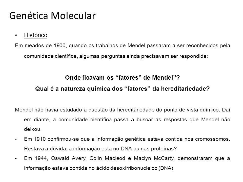Genética Molecular Histórico Em meados de 1900, quando os trabalhos de Mendel passaram a ser reconhecidos pela comunidade científica, algumas pergunta