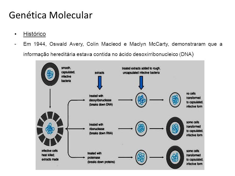 Histórico -Em 1944, Oswald Avery, Colin Macleod e Maclyn McCarty, demonstraram que a informação hereditária estava contida no ácido desoxirribonucleic