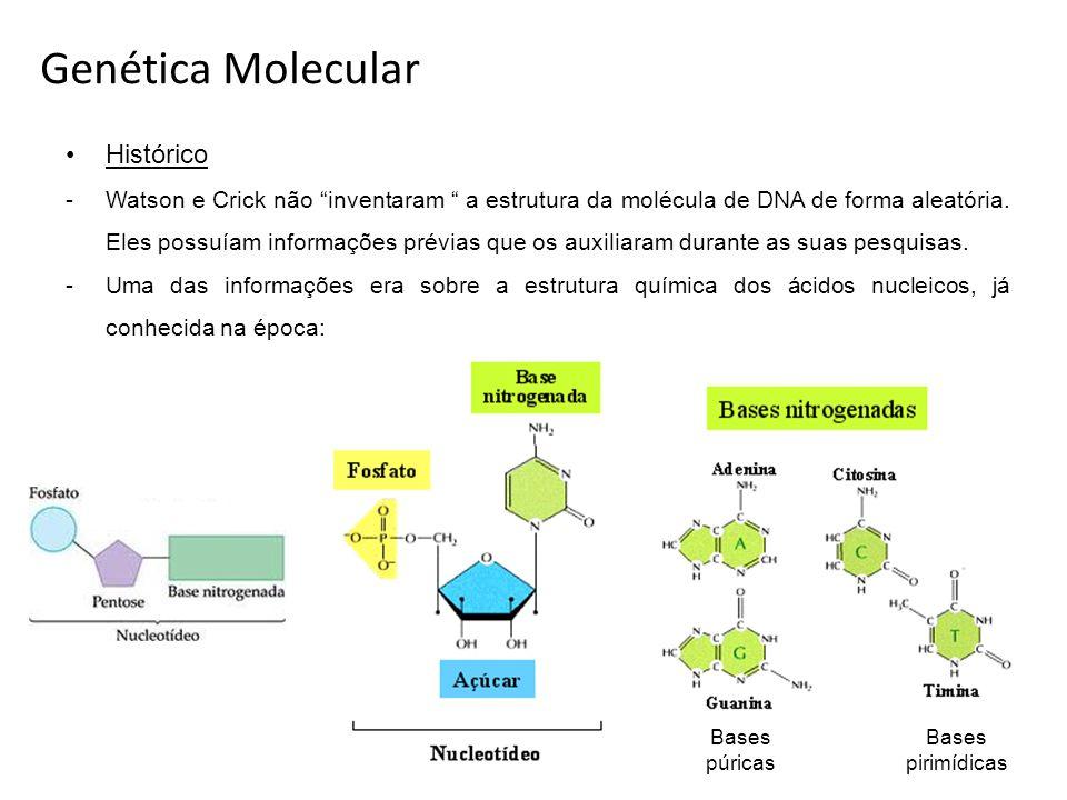 Genética Molecular Histórico -Watson e Crick não inventaram a estrutura da molécula de DNA de forma aleatória. Eles possuíam informações prévias que o