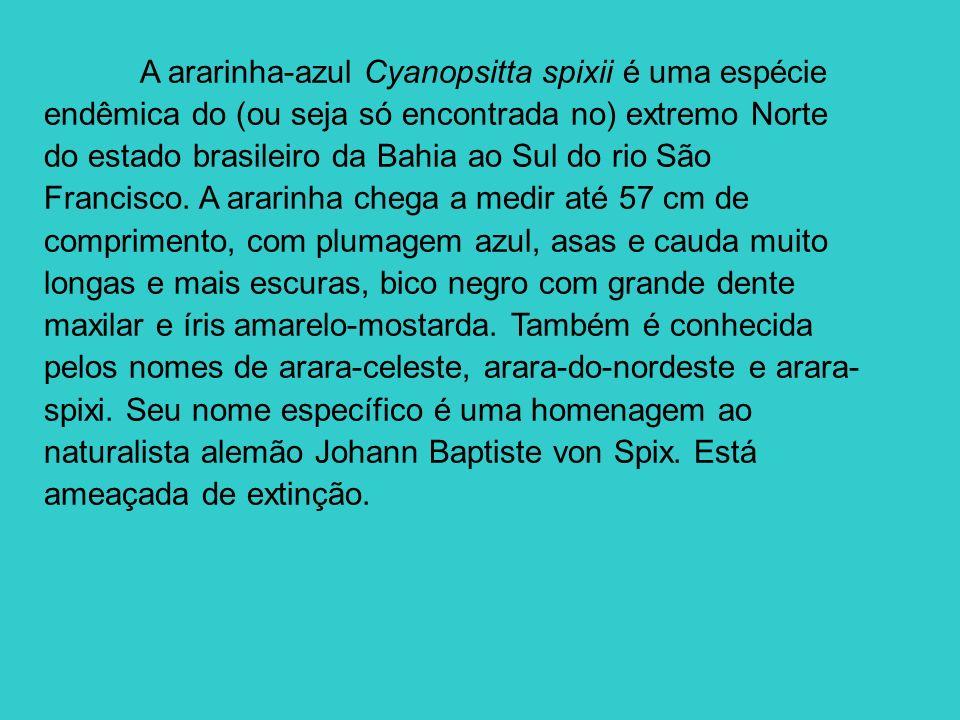 A ararinha-azul Cyanopsitta spixii é uma espécie endêmica do (ou seja só encontrada no) extremo Norte do estado brasileiro da Bahia ao Sul do rio São