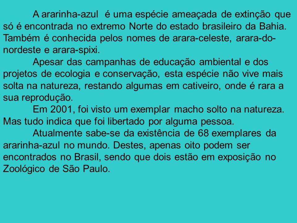 A ararinha-azul é uma espécie ameaçada de extinção que só é encontrada no extremo Norte do estado brasileiro da Bahia. Também é conhecida pelos nomes
