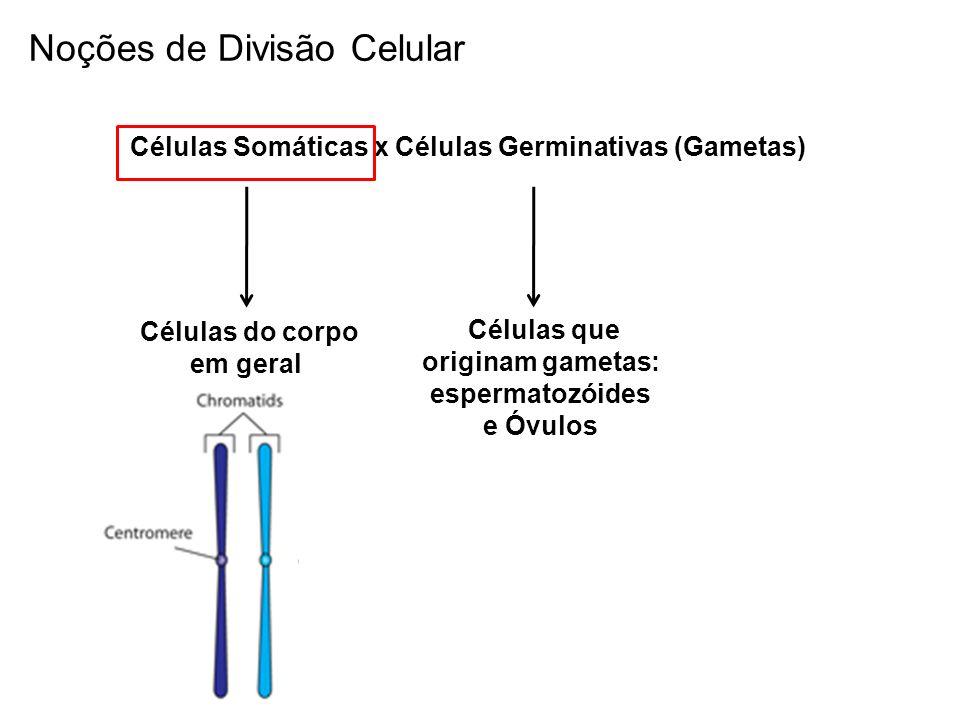 Células Somáticas x Células Germinativas (Gametas) Células do corpo em geral Células que originam gametas: espermatozóides e Óvulos Noções de Divisão