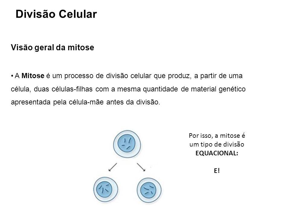Visão geral da mitose A Mitose é um processo de divisão celular que produz, a partir de uma célula, duas células-filhas com a mesma quantidade de mate