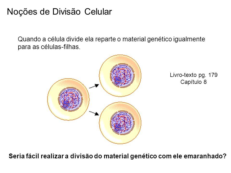 Como ocorre a divisão equacional do material genético.
