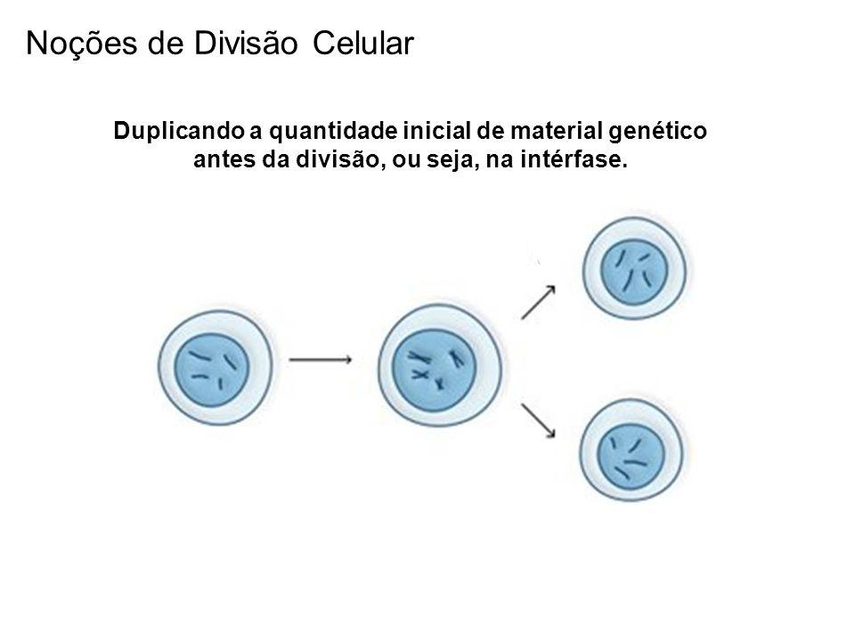 Na realidade, a duplicação do material genético ocorre antes da cromatina se condensar para formar os cromossomos Fio de Cromatina DuplicaçãoCondensação Noções de Divisão Celular