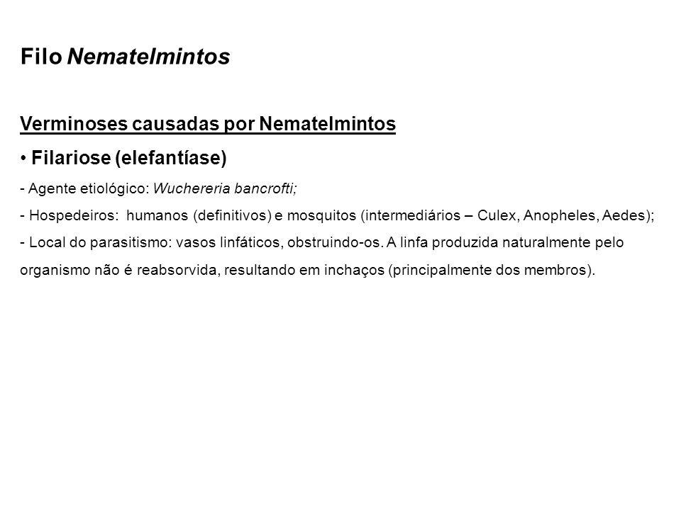Filo Nematelmintos Verminoses causadas por Nematelmintos Filariose (elefantíase) - Agente etiológico: Wuchereria bancrofti; - Hospedeiros: humanos (definitivos) e mosquitos (intermediários – Culex, Anopheles, Aedes); - Local do parasitismo: vasos linfáticos, obstruindo-os.