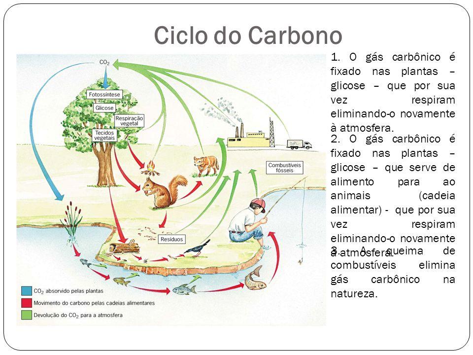 Ciclo do Carbono 1. O gás carbônico é fixado nas plantas – glicose – que por sua vez respiram eliminando-o novamente à atmosfera. 2. O gás carbônico é