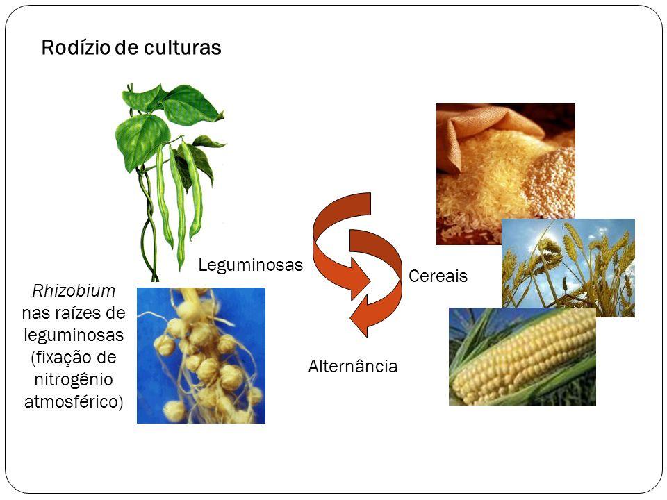 Rodízio de culturas Rhizobium nas raízes de leguminosas (fixação de nitrogênio atmosférico) Cereais Leguminosas Alternância
