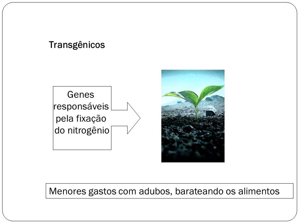 Transgênicos Genes responsáveis pela fixação do nitrogênio Menores gastos com adubos, barateando os alimentos