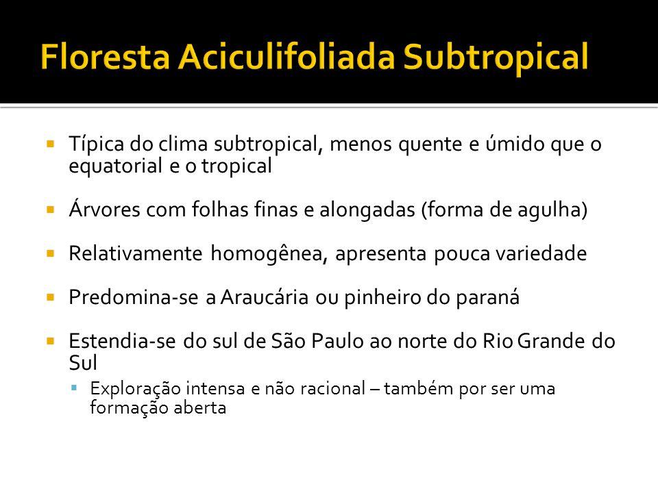 Típica do clima subtropical, menos quente e úmido que o equatorial e o tropical Árvores com folhas finas e alongadas (forma de agulha) Relativamente h