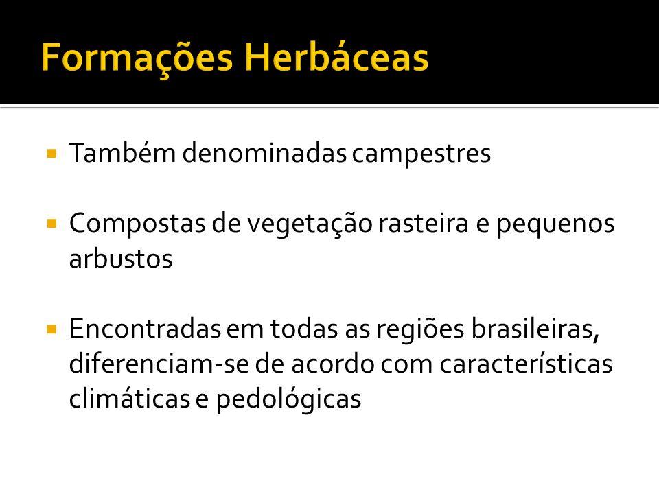 Também denominadas campestres Compostas de vegetação rasteira e pequenos arbustos Encontradas em todas as regiões brasileiras, diferenciam-se de acord