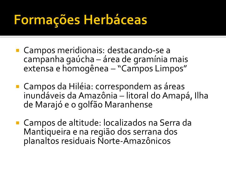 Campos meridionais: destacando-se a campanha gaúcha – área de gramínia mais extensa e homogênea – Campos Limpos Campos da Hiléia: correspondem as área