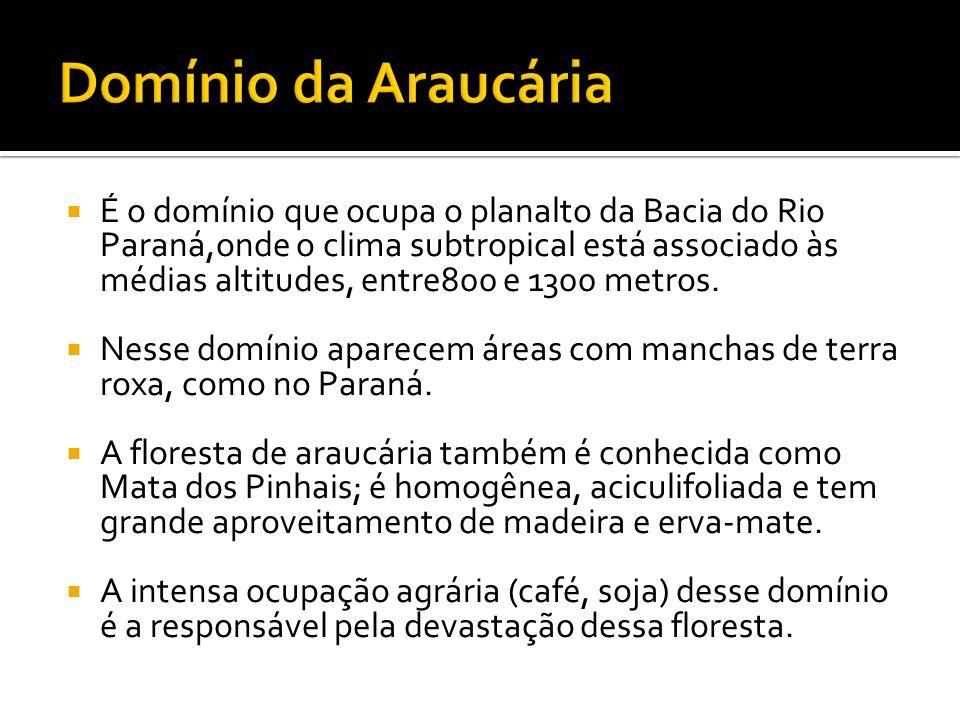 É o domínio que ocupa o planalto da Bacia do Rio Paraná,onde o clima subtropical está associado às médias altitudes, entre800 e 1300 metros. Nesse dom