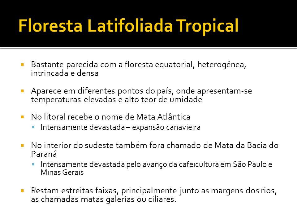 Formação rasteira nas áreas de alagamento e alguns arbustos Em regiões mais altas misturam-se espécies do cerrado Em regiões mais úmidas apresenta espécies arbóreas típicas da floresta tropical Ocorre em uma grande depressão que abrange os estado de Mato Grosso e Mato Grosso do Sul