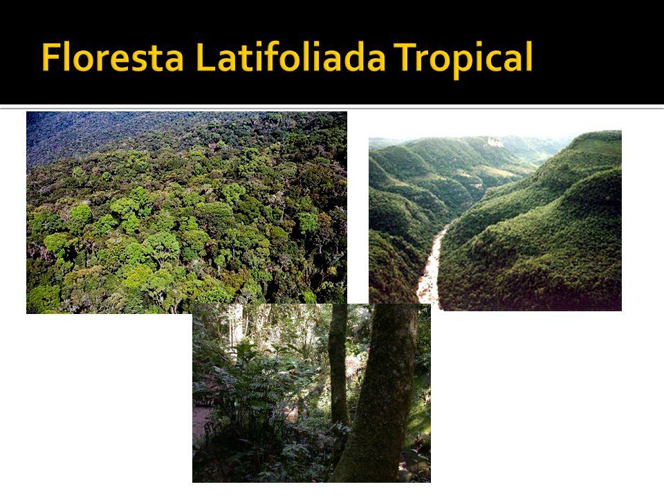 Corresponde à área do Brasil Central e apresenta extensos chapadões e chapadas, com domínio do clima tropical semi-úmido e vegetação do cerrado.