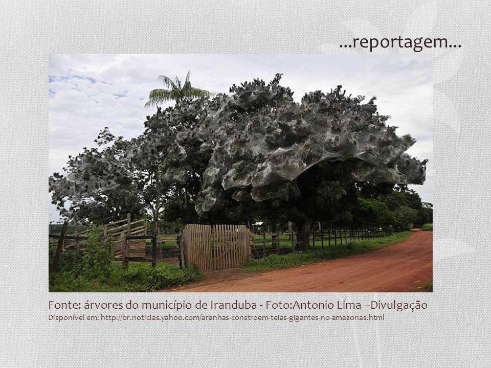 Fonte: árvores do município de Iranduba - Foto:Antonio Lima –Divulgação Disponível em: http://br.noticias.yahoo.com/aranhas-constroem-teias-gigantes-n