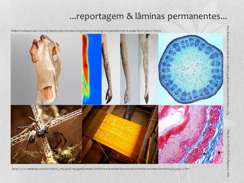 http:// www.estadao.com.br/noticia_imp.php?req=geral,museu-londrino-expoe-tecidos-dourados-feitos-com-teia-de-aranha,824997,0.htm http://modaspot.abri