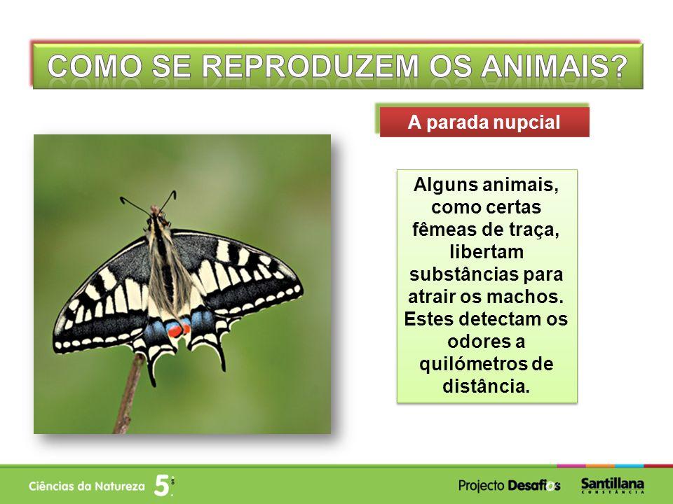 Alguns animais, como certas fêmeas de traça, libertam substâncias para atrair os machos. Estes detectam os odores a quilómetros de distância. A parada