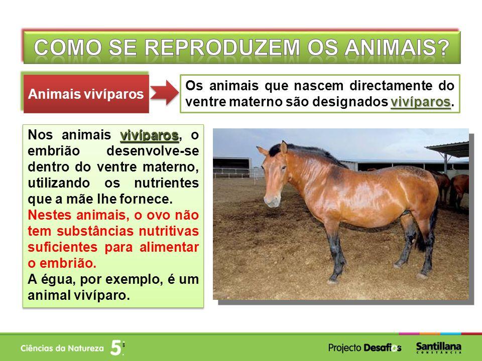 vivíparos Os animais que nascem directamente do ventre materno são designados vivíparos.