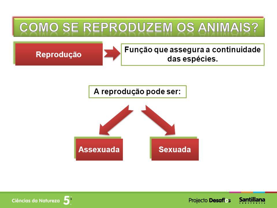 Função que assegura a continuidade das espécies. Reprodução A reprodução pode ser: Sexuada Assexuada