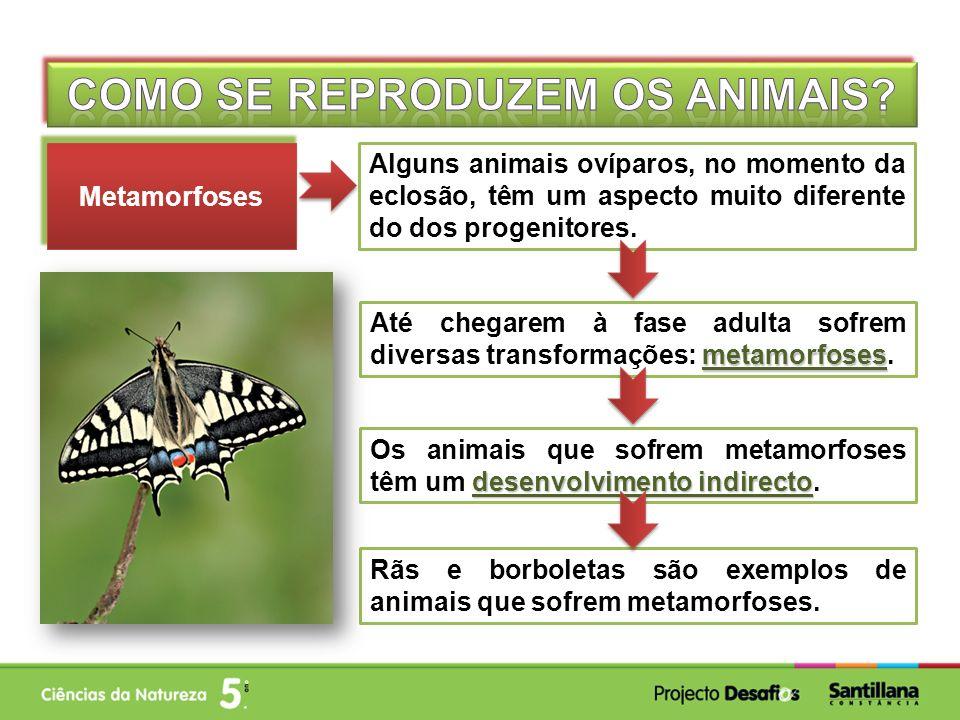 Alguns animais ovíparos, no momento da eclosão, têm um aspecto muito diferente do dos progenitores. Metamorfoses metamorfoses Até chegarem à fase adul