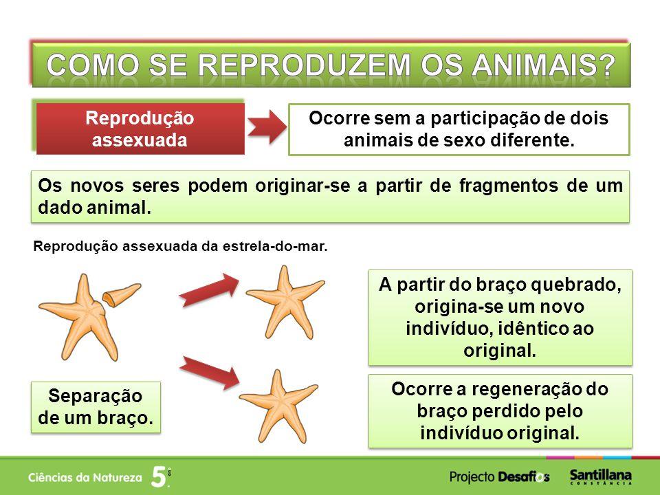 Classificação dos animais como ovíparos ou vivíparos. Vivíparos Ovíparos Vivíparos