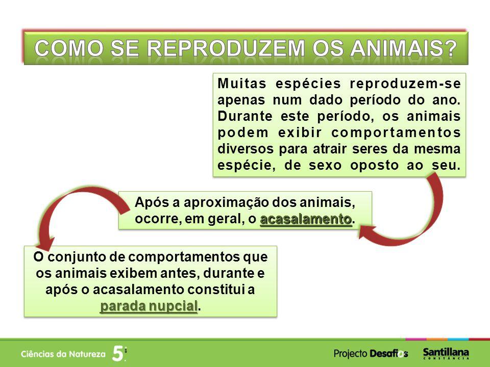 acasalamento Após a aproximação dos animais, ocorre, em geral, o acasalamento. Muitas espécies reproduzem-se apenas num dado período do ano. Durante e