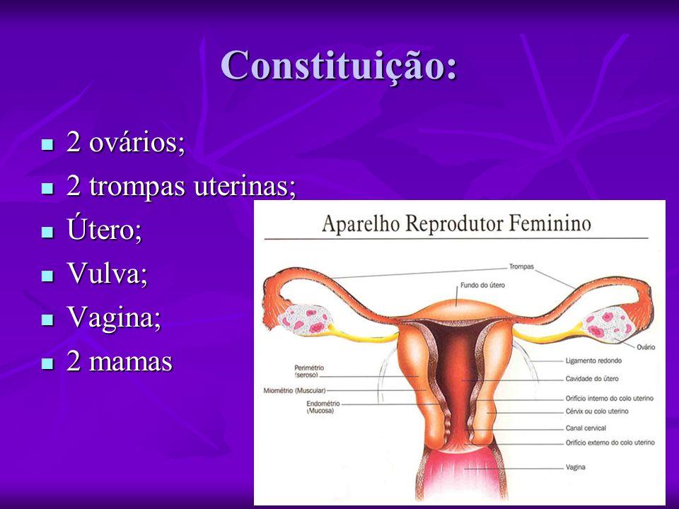 Constituição: 2 ovários; 2 ovários; 2 trompas uterinas; 2 trompas uterinas; Útero; Útero; Vulva; Vulva; Vagina; Vagina; 2 mamas 2 mamas