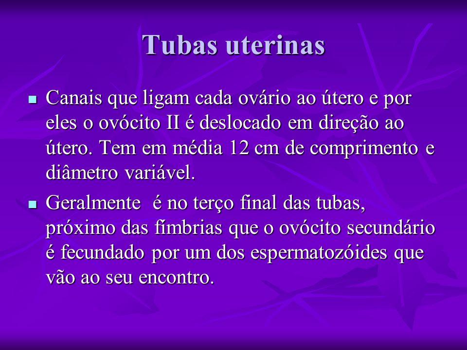 Tubas uterinas Canais que ligam cada ovário ao útero e por eles o ovócito II é deslocado em direção ao útero.
