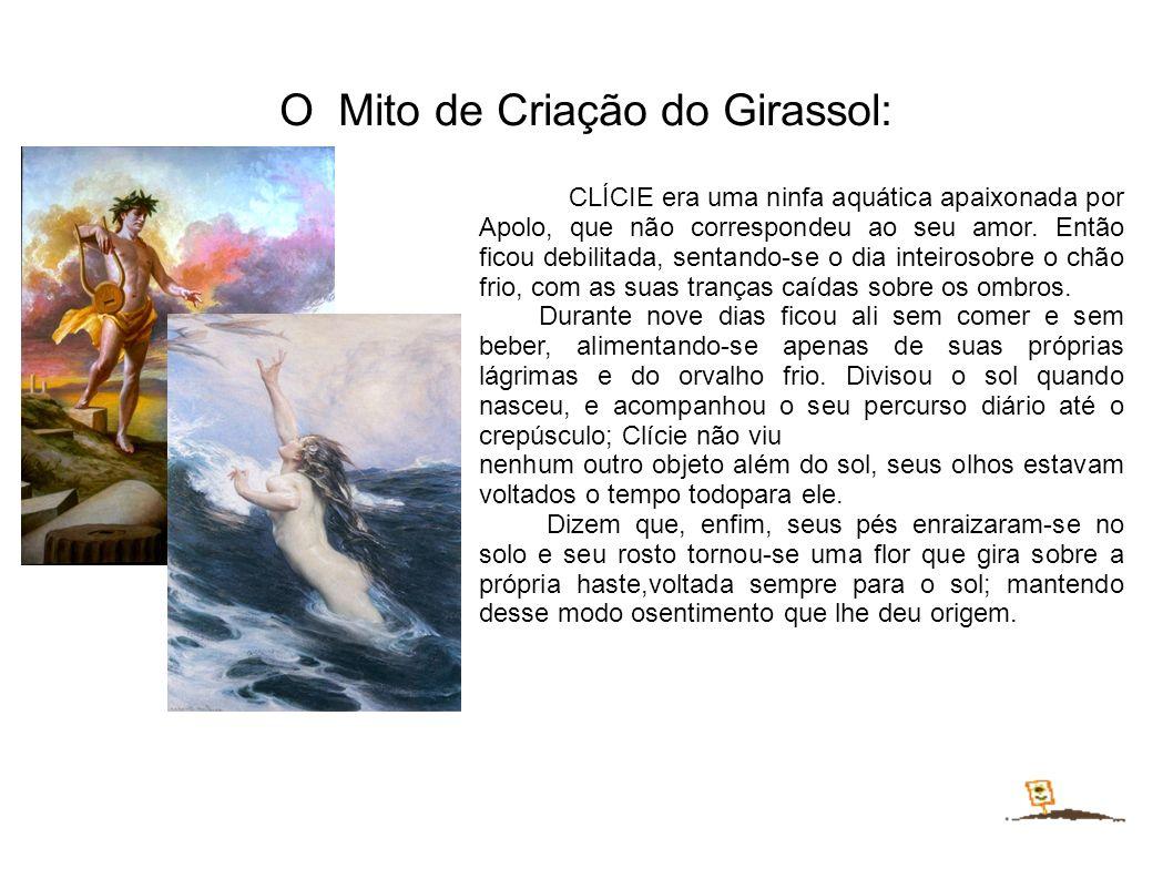 O Mito de Criação do Girassol: CLÍCIE era uma ninfa aquática apaixonada por Apolo, que não correspondeu ao seu amor.