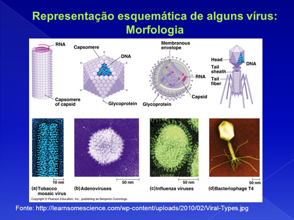 Fonte: http://learnsomescience.com/wp-content/uploads/2010/02/Viral-Types.jpg