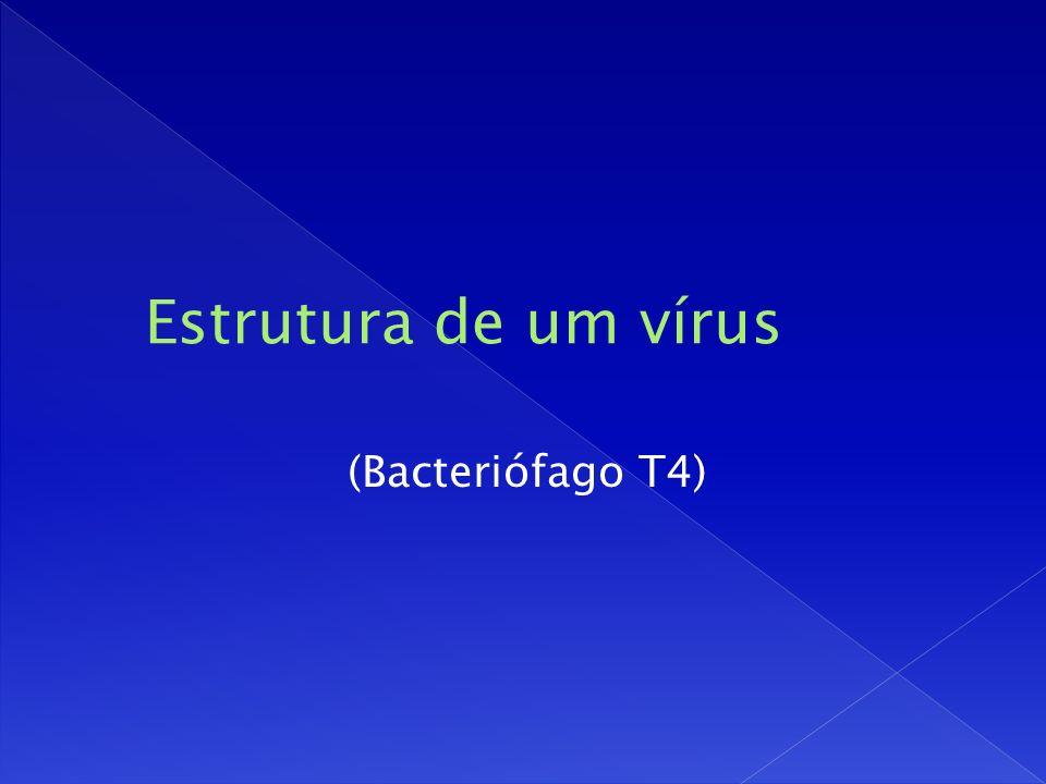 (Bacteriófago T4)