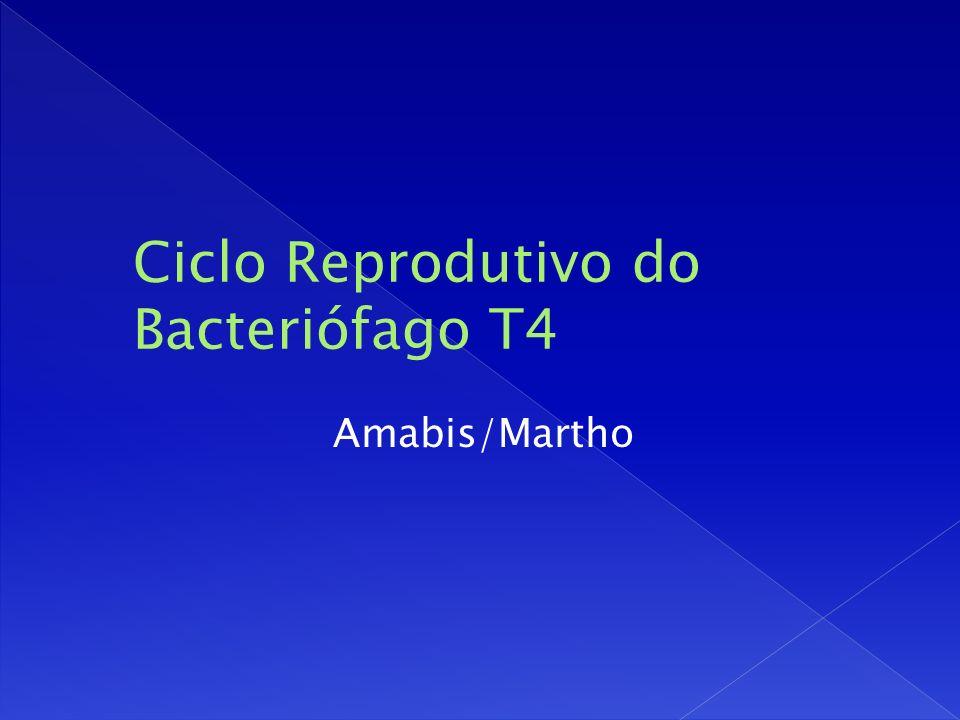 Amabis/Martho