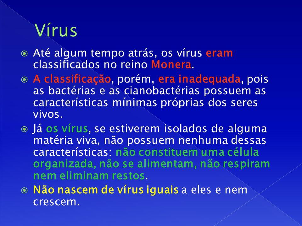 Até algum tempo atrás, os vírus eram classificados no reino Monera.