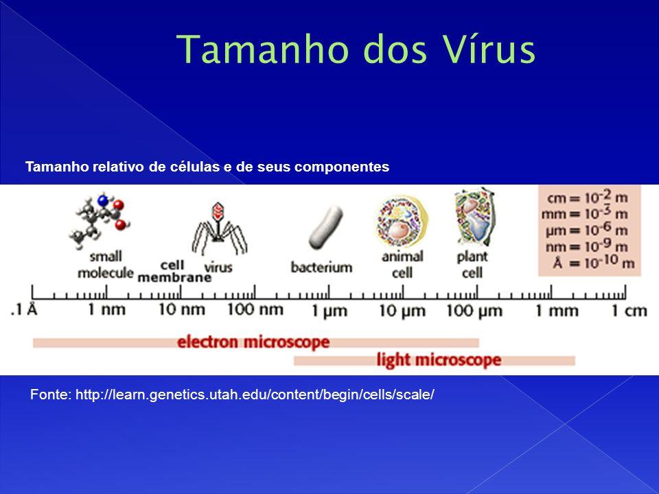 Fonte: http://learn.genetics.utah.edu/content/begin/cells/scale/ Tamanho relativo de células e de seus componentes