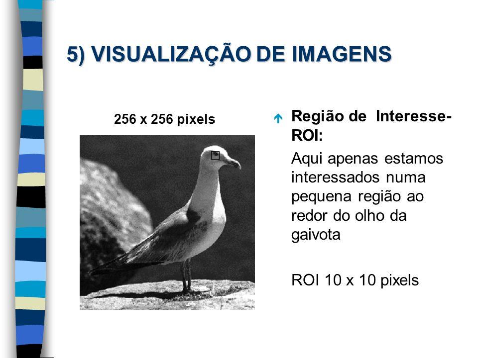 5) VISUALIZAÇÃO DE IMAGENS 256 x 256 pixels é Região de Interesse- ROI: Aqui apenas estamos interessados numa pequena região ao redor do olho da gaivo