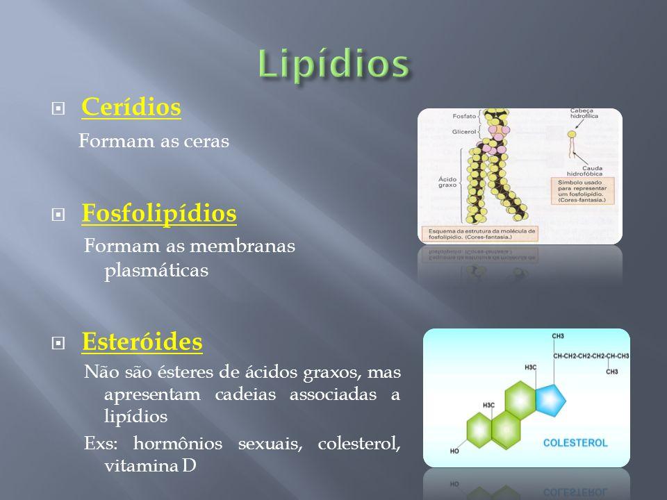 Cerídios Formam as ceras Fosfolipídios Formam as membranas plasmáticas Esteróides Não são ésteres de ácidos graxos, mas apresentam cadeias associadas