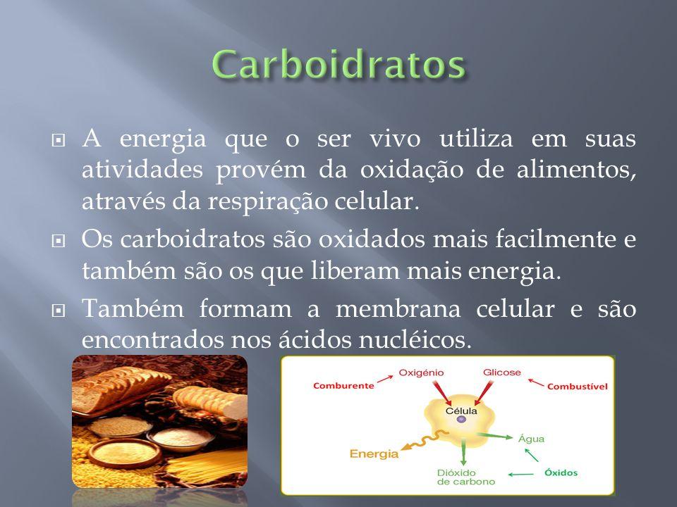 A energia que o ser vivo utiliza em suas atividades provém da oxidação de alimentos, através da respiração celular. Os carboidratos são oxidados mais
