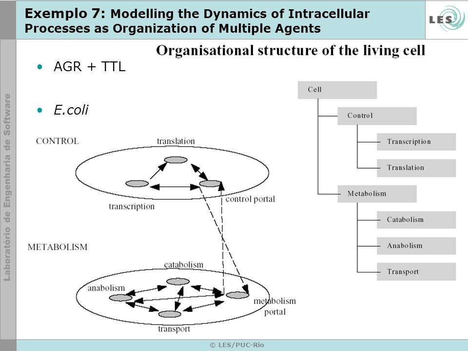 © LES/PUC-Rio Exemplo 7: Modelling the Dynamics of Intracellular Processes as Organization of Multiple Agents AGR + TTL E.coli