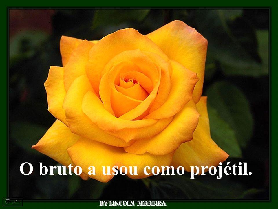 lincol narts@terra.com.br