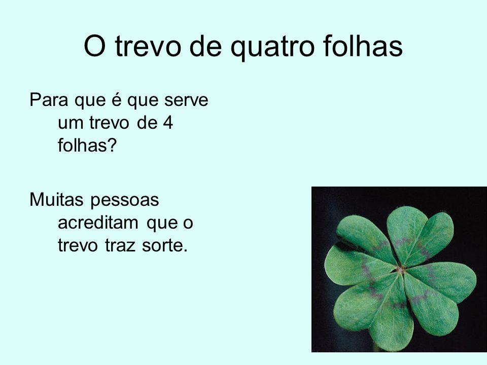 O trevo de quatro folhas Para que é que serve um trevo de 4 folhas? Muitas pessoas acreditam que o trevo traz sorte.
