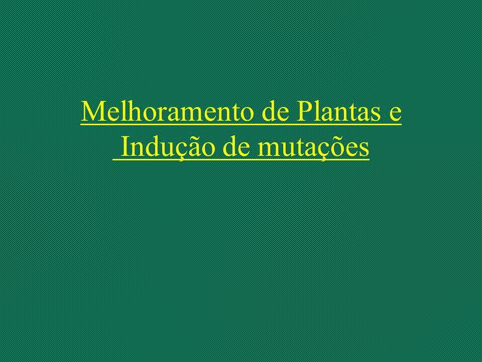 Melhoramento de Plantas e Indução de mutações