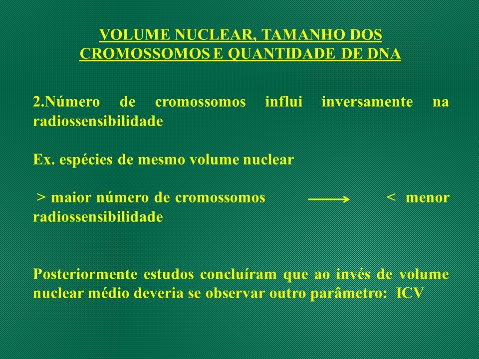 VOLUME NUCLEAR, TAMANHO DOS CROMOSSOMOS E QUANTIDADE DE DNA 2.Número de cromossomos influi inversamente na radiossensibilidade Ex. espécies de mesmo v