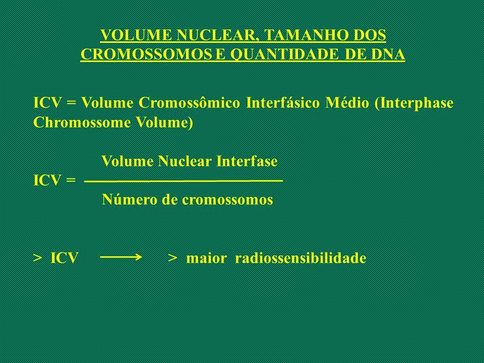 VOLUME NUCLEAR, TAMANHO DOS CROMOSSOMOS E QUANTIDADE DE DNA ICV = Volume Cromossômico Interfásico Médio (Interphase Chromossome Volume) Volume Nuclear